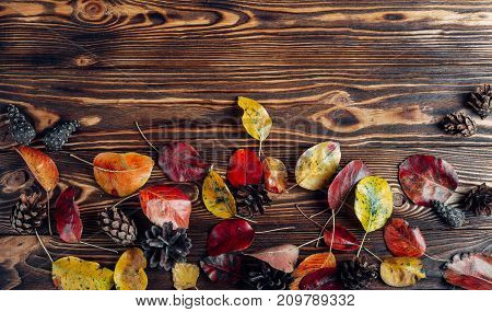 different autumn leaves and pine cones on a brown tree background