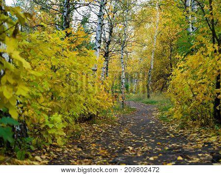 Pathway through the beautiful autumn forest. Autumn landscape