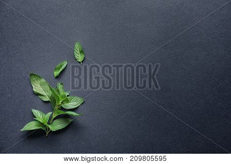 Fresh mint on dark grey background