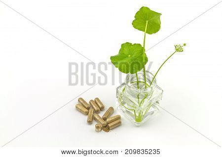 Herbal capsule powder and green Asiatic Pennywort (Centella asiatica Hydrocotyle umbellata L or Water pennywort ) with long stalk in glass bottles on white backgroundselective focus.