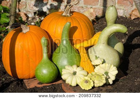 Pumpkins and Gourds on display outdoors in garden