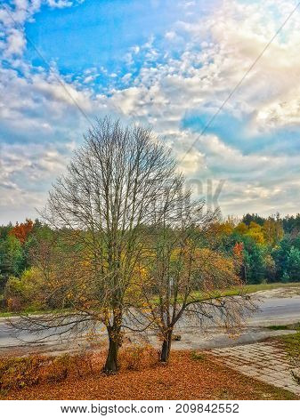 Beautiful autumn colorful forest landscape and cumulus silver cloudy sky