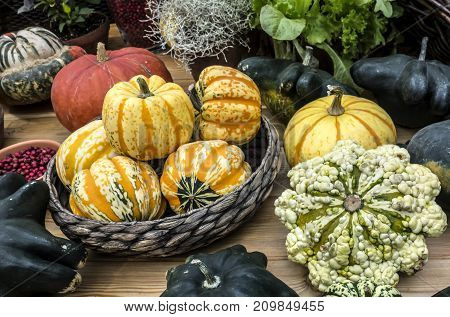 Rural natural background of colorful pumpkins lying on the table.
