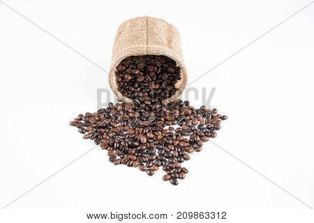 seed coffee bean  isolated / coffee beanroast