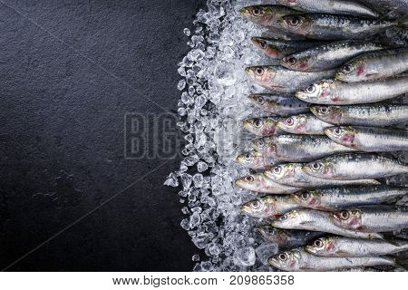 Raw sardine on ice offered as top view on a black slate wih copy space left