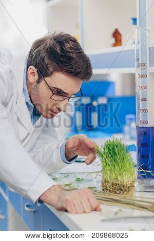 Biologist Working With Grass In Laboratory