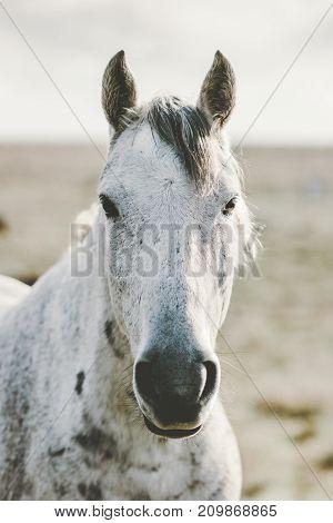 White Horse Animal portrait close up pasture grazing field landscape on background