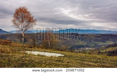 Birch Tree On Hill Above The Village
