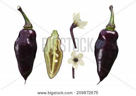 Pimenta De Neyde C. Chinense Pepper, Paths