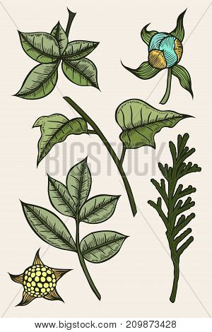 Colored set of plants painted by hand, a branch of spruce or tuja, leafy branches and flowers