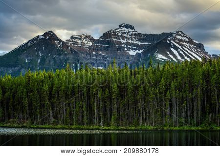 Deep forest along Herbert Lake in Banff National Park with snow-covered peaks of canadian Rocky Mountains in the background.
