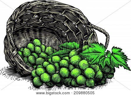 Bunches of grape in the wicker basket