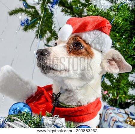 Puppy is waiting for presents under gift tree.