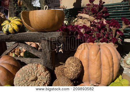 exhibition of pumpkins on a farmer market