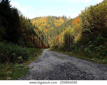 Forest gravel road - autumn , Forest stone path , Gravel road with autumn foliage