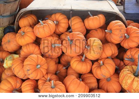Small pumpkins spilling out of a basket
