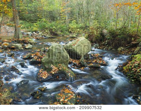 Long Exposure Magic Forest Stream Cascade Creek In Autumn With Stones Ferns And Fallen Leaves And Tr