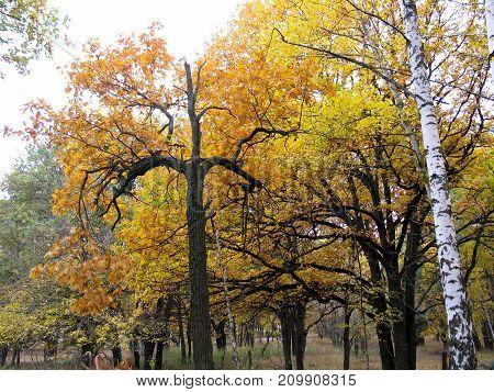 Broken tree top in a beautiful autumn forest