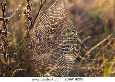 concentric spider web in sunlight on the natural vegetation blurred background. autumn meadow