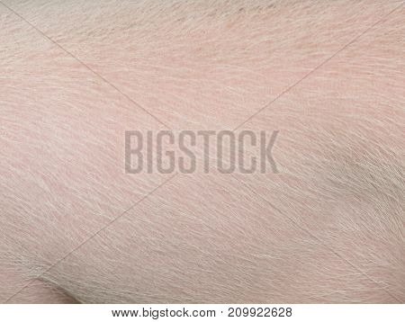 a pink background texture of pig skin.
