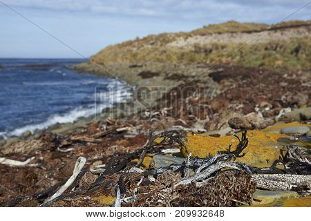 Colourful lichen covered boulders on the coast of Sea Lion Island in the Falkland Islands.