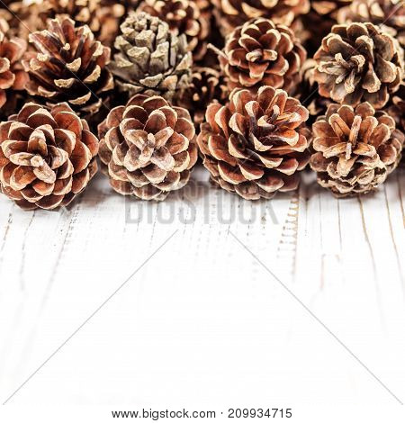 Cones on a white background. Square. Concept Happy Christmas New Year holiday winter.