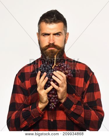 Man With Beard Holds Bunch Of Grapes Isolated On White