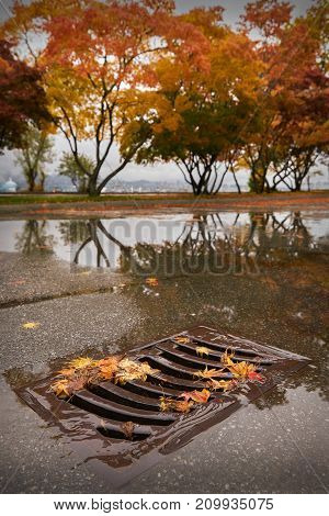 Storm Drain and Autumn Leaves. Heavy rain pours into a storm drain in autumn.