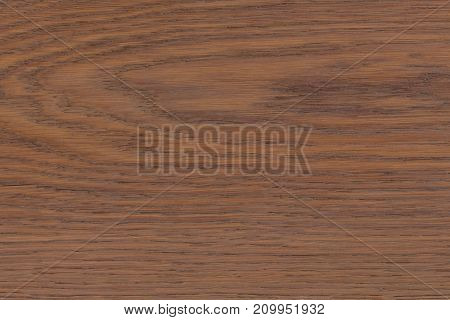 Wood texture for design and decoration. Hi res photo.