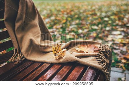 Falling maple leaves are on wool scarf fogorten on bench in park