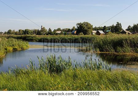 Rural landscape with a river overgrown with reeds and a village on the shore sunny summer day