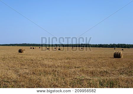 Rural landscape with dry hay bales in the field sunny summer day