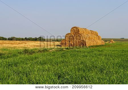 Dry rolled straw bales stacked in a pyramid form pile for a forage of farm animals during the winter period