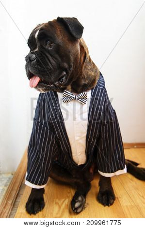 Dog In A Wedding Suit