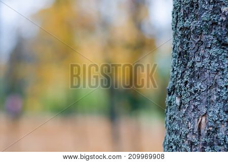 Bark of a tree blurred background of nature autumn
