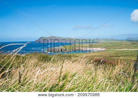 Dry grass blowing in wind in foreground of rugged west Irish coast along Wild Atlantic Way bays and headlands beyond green fields.