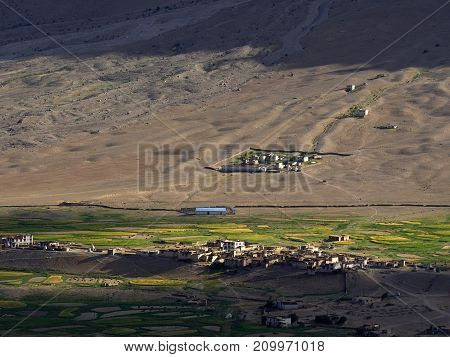 Village is in the mountains: at the base of the brown hill there are green fields of barley on the of the farmhouse and vegetable gardens summer evening in Zanskar Himalayas Northern India.