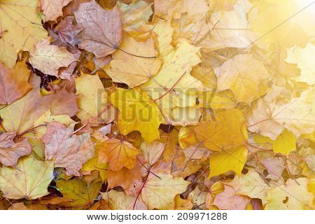 Autumn leaves on the ground nature background