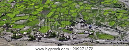 The village is among the green fields of barley: an interior panoramic photograph taken from the height Tibet the Himalayas.