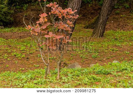 Small Tree With Brown Leaves