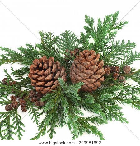 Decorative winter greenery with cedar cypress and juniper leaf sprigs with pine cones on white background.