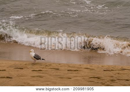 Seagull Standing Alone On Sandy Beach