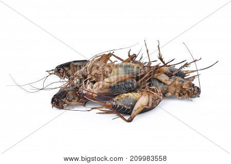 pile of dead cricket (gryllus) tropical insects isoalted on white background