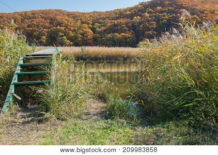 Wooden pier with stairs on a pond windless weather. Autumn forest and yellow reeds on the shore.