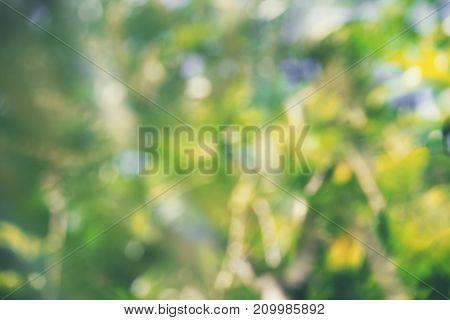 Abstract green bokeh background. Soft colors in nature