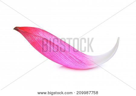 closeup of pink lotus petal isolated on white background