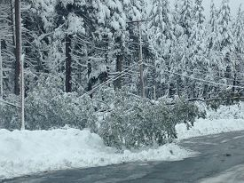 Dangers of winter storms.  Downed power lines stretch into the street, a long a heavily wooded mountain pass.