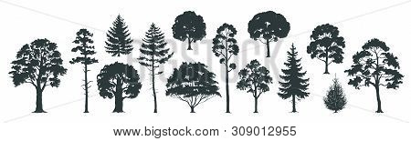 Trees Silhouettes. Forest And Park Pines Firs And Spruces, Coniferous And Deciduous Trees. Vector Is