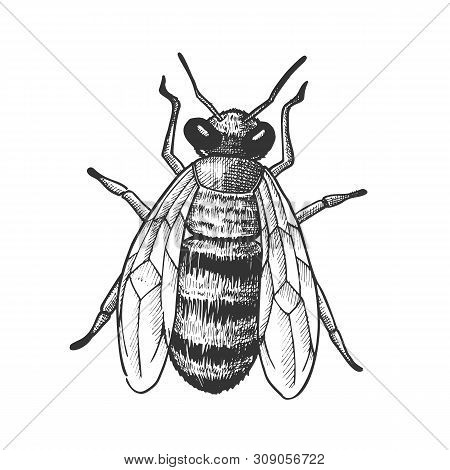 Striped Bee Flying Insect Animal Top View Vector. Bee With Two Pairs Of Wings, Paws And Antennae. Po