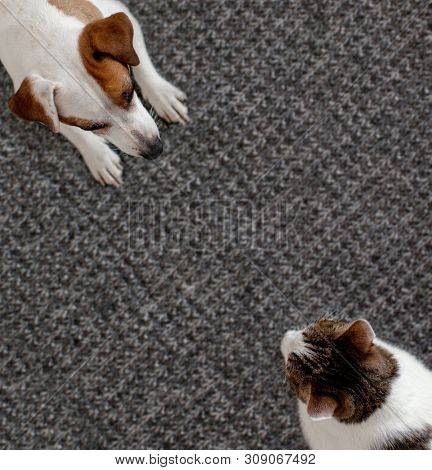 Dog and cat together. Dog hugs a cat on the rug at home. Friendship of pets